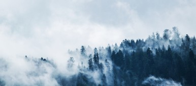 green pine trees covered with fog under white sky during daytime