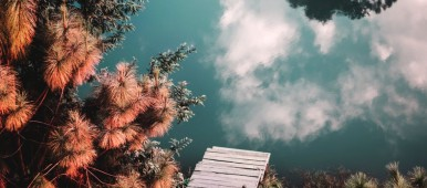top view of trees next to a small wooden dock and lake