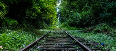 Railroad track in the middle of a forest